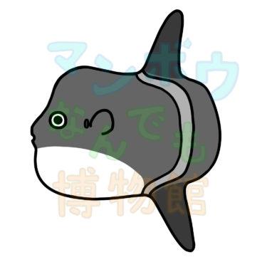 フグ目魚類の種数とイラスト(日本版)