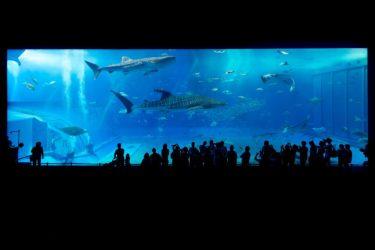 日本の水族館マップ  – Japanese Aquariums Map –