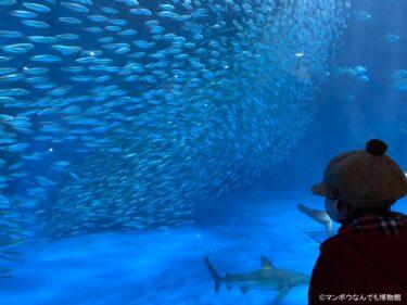 日本の水族館一覧