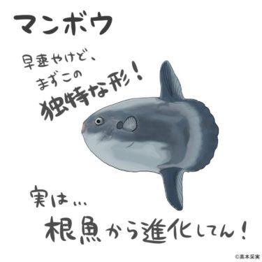 高本采実さんとコラボ!