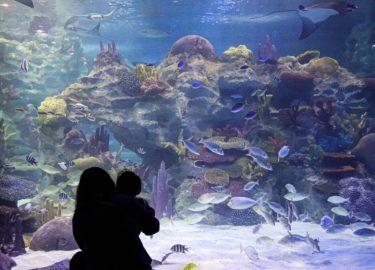 海外の水族館と日本動物園水族館協会に加盟する日本の水族館一覧