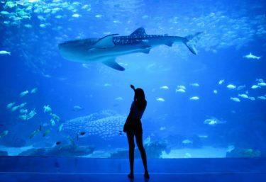 世界の水族館マップ  – World Aquariums Map –