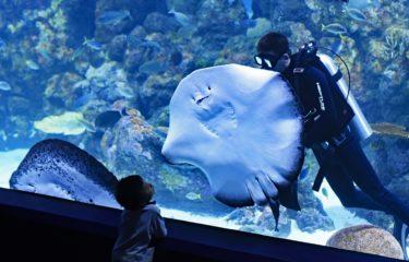 世界に水族館はいくつある?世界の水族館の数を地域区分・国別で比較