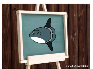 フグ目魚類の種数とイラスト(世界版)