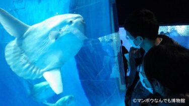 【2021年最新】日本でマンボウに会える水族館!飼育展示情報も紹介