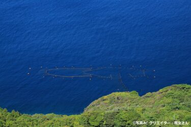 マンボウ類が絶滅すると定置網漁師に4080万円以上の損失が出る?